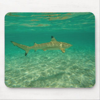 Shark in will bora will bora mouse pad