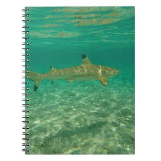 Shark in will bora will bora notebooks