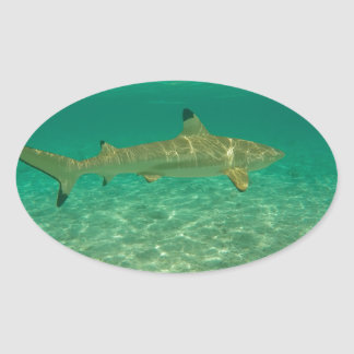 Shark in will bora will bora oval sticker
