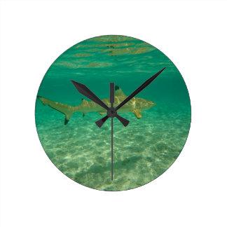 Shark in will bora will bora round clock