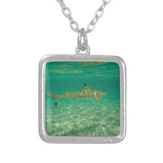 Shark in will bora will bora silver plated necklace