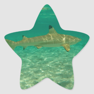 Shark in will bora will bora star sticker