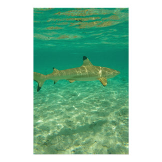 Shark in will bora will bora stationery