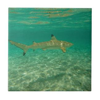 Shark in will bora will bora tile