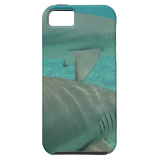 shark iPhone 5 covers