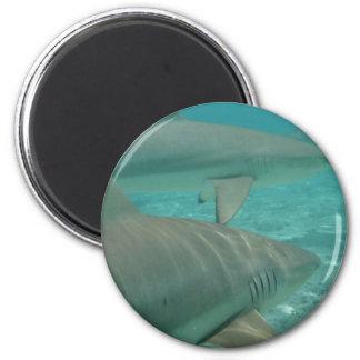 shark magnet