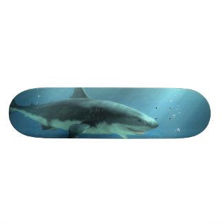 Shark Skate Decks