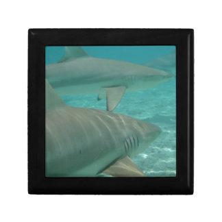 shark trinket boxes