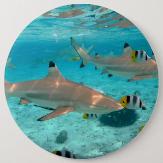 Sharks in the Bora Bora lagoon 6 Inch Round Button