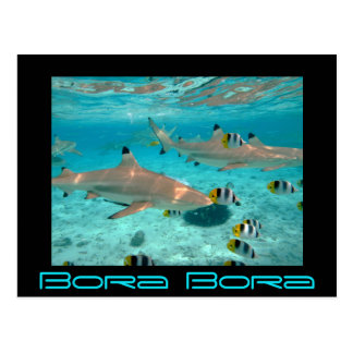 Sharks in the Bora Bora lagoon black postcard