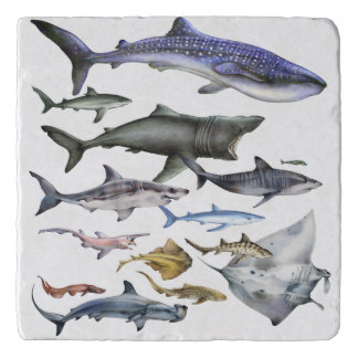 Sharks of the World Trivet