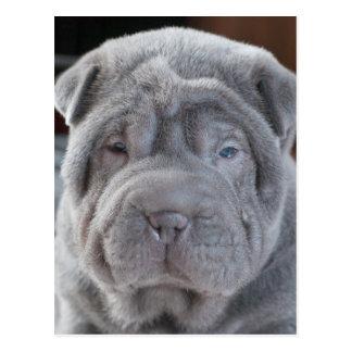 Sharpei Puppy Postcard