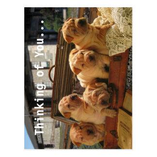 Sharpei Shar Pei Dogs Postcard