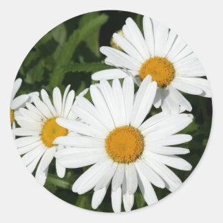 Shasta Daisy stickers