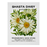 Shasta Daisy Vintage Seed Packet Posters