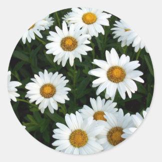 Shasta Daisy ( WestCreek) Sticker