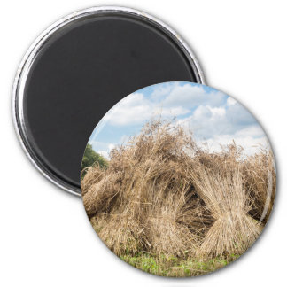 Sheaves of corn standing upright as group 2 inch round magnet