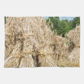 Sheaves of rye standing at rye field towels
