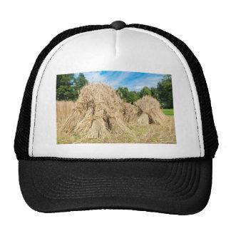 Sheaves of rye standing at rye field trucker hat