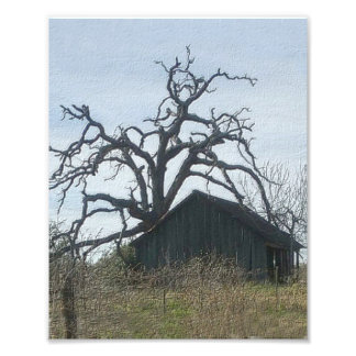 Shed and Tree Photograph