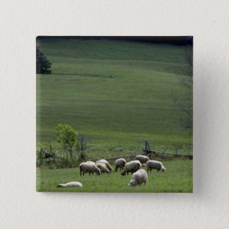Sheep 2 Inch Square Button