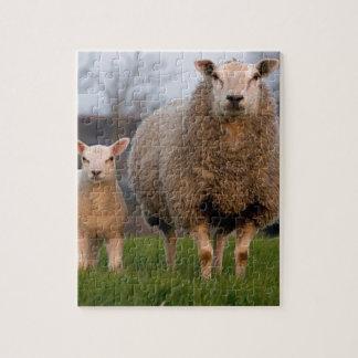 Sheep and Lamb Farm Animals Puzzles