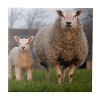 Sheep and Lamb Farm Animals Tiles