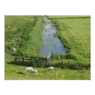 Sheep and Lambs in Grass Meadow Land Poster