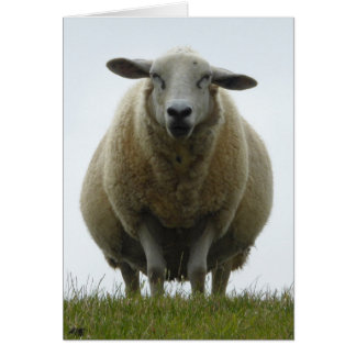Sheep Apology Card