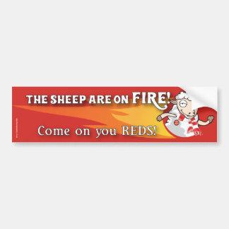 Sheep are on Fire bumper sticker