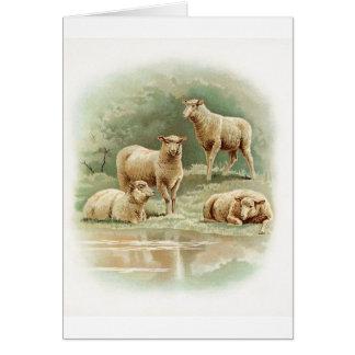 Sheep at the Pond, Card