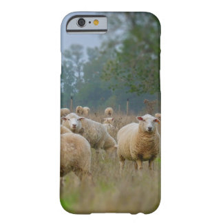 Sheep Barely There iPhone 6 Case