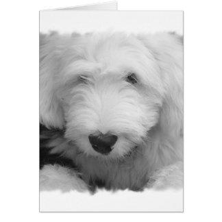 Sheep Dog Photo Greeting Card