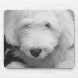 Sheep Dog Photo Mouse Pad