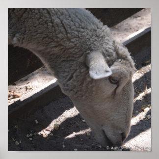 sheep eating popcorn poster