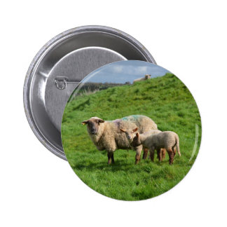 Sheep Family 2 Inch Round Button