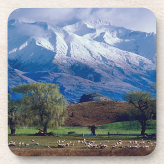 Sheep grazing below the snow-capped Harris Drink Coasters