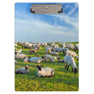 Sheep in Pasture Clipboard