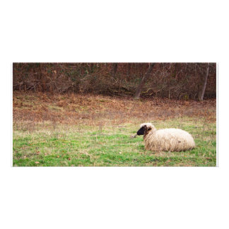 Sheep in the Meadow - Farm Nature Photography Customized Photo Card
