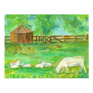 Sheep Lambs Chickens Farm Animals Painting Postcard