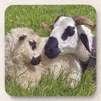 Sheep of Thones et Marthod Coaster