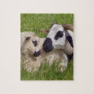 Sheep of Thones et Marthod Jigsaw Puzzle