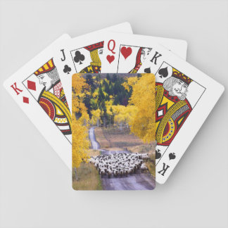 Sheep on Country Road Playing Cards