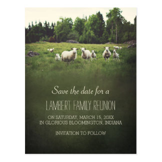 Sheep on Pasture | Family Reunion Save the Date Postcard