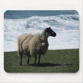 Sheep on wild south Devon coastline Mouse Pad