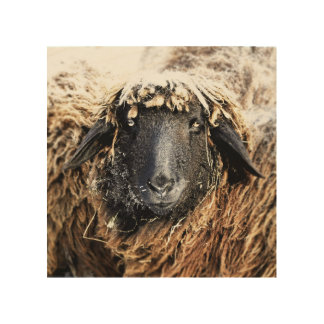 Sheep portrait on wood wood wall art