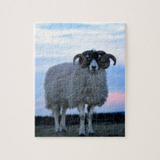 Sheep Puzzle/Jigsaw with Tin Puzzle