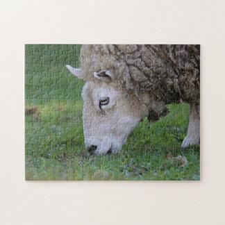 Sheep Puzzles