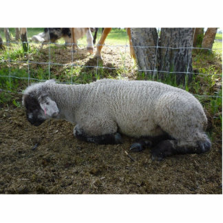 Sheep Sculpture Cut Outs