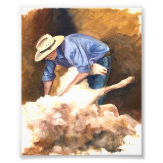 Sheep Shearing Photo Print